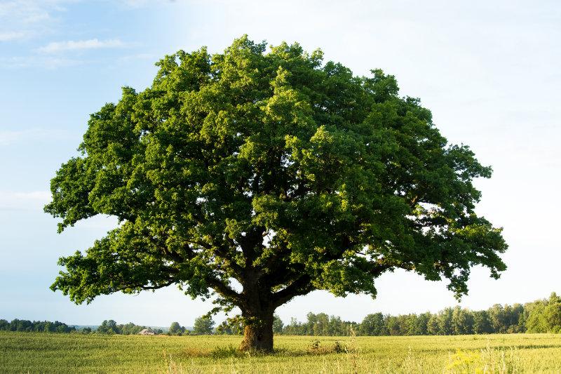 Comment élaguer un arbre en hauteur ?