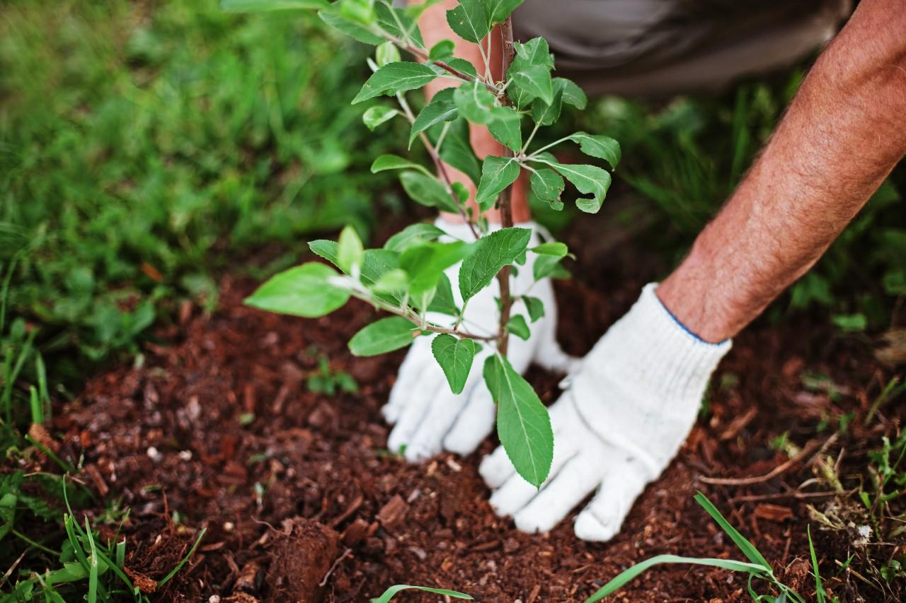 Les conseils d'un paysagiste pour la plantation de végétaux