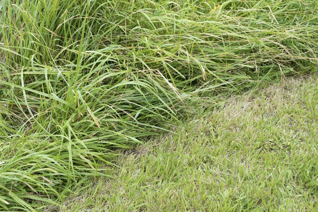 Travaux de tonte de pelouse sur Rodez et ses environs
